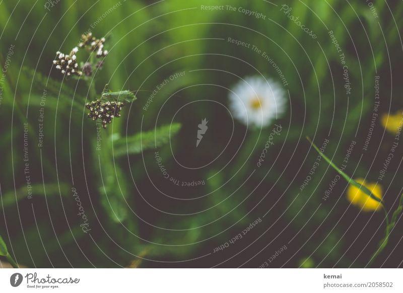 Flip Umwelt Natur Pflanze Tier Sonnenlicht Sommer Schönes Wetter Blume Gras Grünpflanze Wiese Wildtier Insekt Heuschrecke 1 sitzen authentisch dunkel schön grün