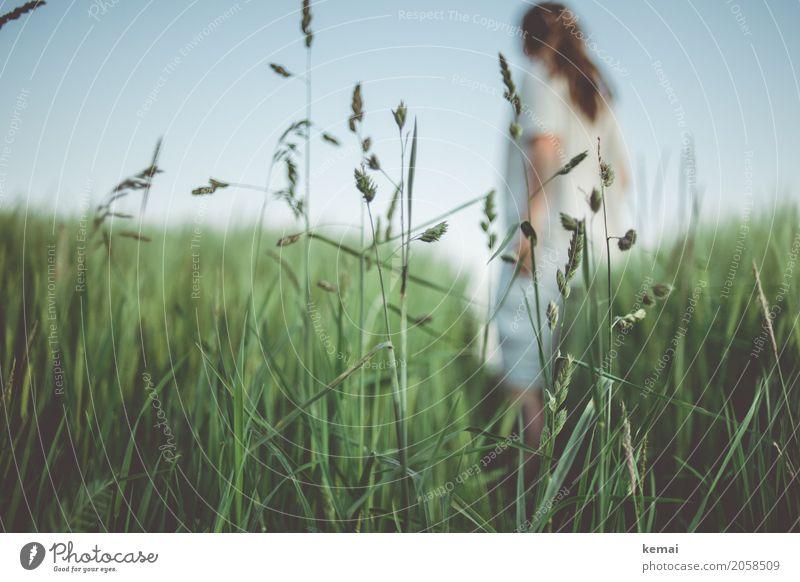 Summer greens IV Mensch Natur Pflanze Sommer grün Erholung ruhig Leben Freiheit Ausflug Freizeit & Hobby Zufriedenheit Feld frisch stehen warten