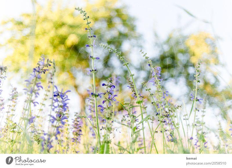 Frühlingswiese Umwelt Natur Pflanze Wolkenloser Himmel Sommer Schönes Wetter Blume Gras Blüte Wiese Blühend Wachstum authentisch glänzend natürlich schön gelb