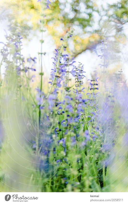 Es blüht! Leben harmonisch Wohlgefühl Sinnesorgane Erholung ruhig Natur Pflanze Sommer Schönes Wetter Blume Wildpflanze Wiese Blühend Wachstum ästhetisch