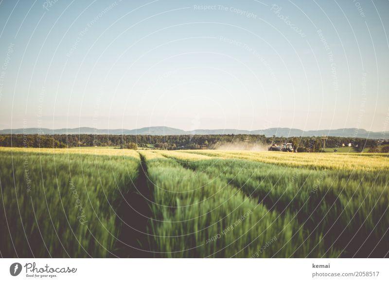 Ernte ruhig Ausflug Ferne Freiheit Umwelt Landschaft Wolkenloser Himmel Sommer Schönes Wetter Nutzpflanze Kornfeld Getreidefeld Gerstenfeld Hügel