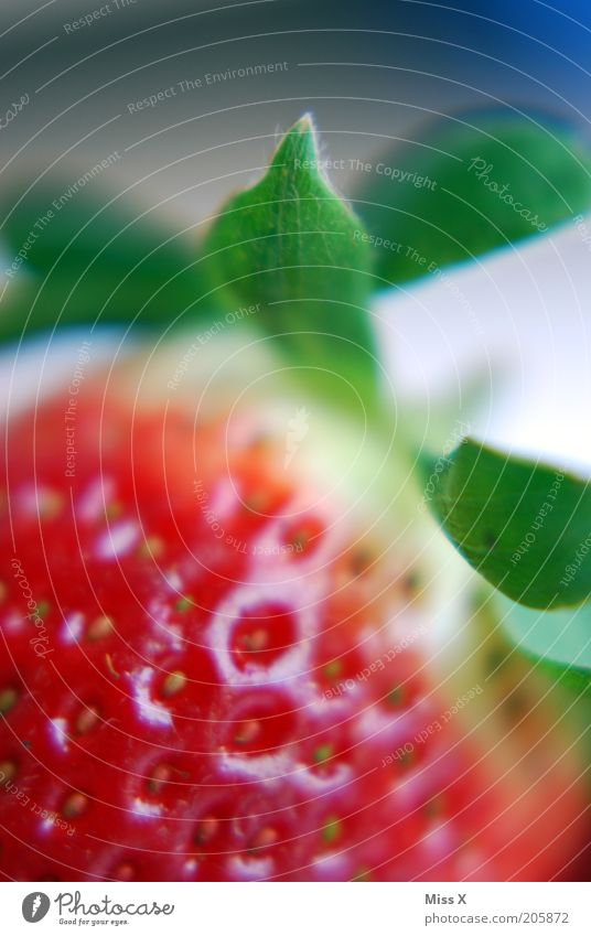 Erdbeere Lebensmittel Frucht Ernährung Bioprodukte Sommer Blatt frisch Gesundheit lecker saftig süß rot reif Erdbeeren Beeren Farbfoto mehrfarbig Nahaufnahme