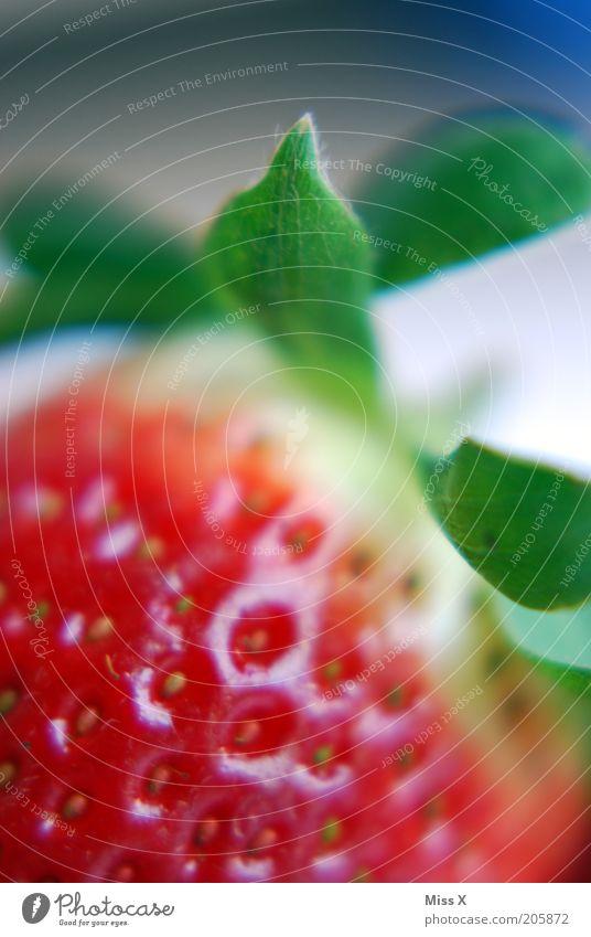 Erdbeere rot Sommer Blatt Ernährung Gesundheit Lebensmittel Frucht frisch süß lecker reif Vitamin Bioprodukte Beeren Erdbeeren saftig