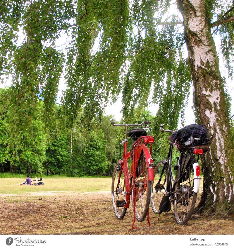 holländer in lauerstellung Lifestyle Stil Glück Freizeit & Hobby Umwelt Natur Landschaft Klima Schönes Wetter Pflanze Baum Grünpflanze Park Wiese Wald Fahrrad