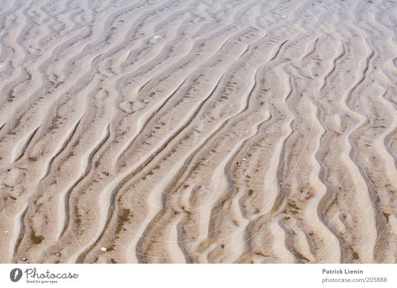 Watt ist das?! Umwelt Natur Landschaft Klima Küste Strand Nordsee Spuren Linie Spiekeroog Nationalpark Naturschutzgebiet Umweltschutz Vorsicht nass Wasser
