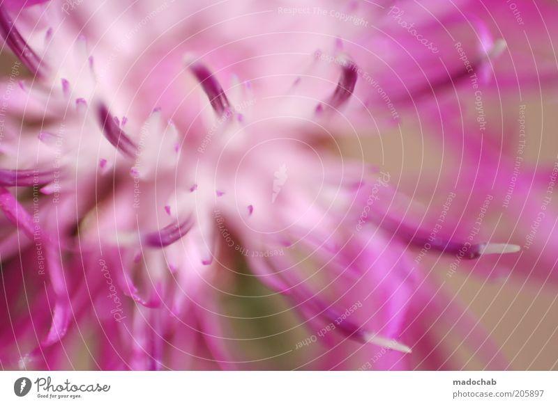 blumig Natur schön Blume Pflanze Sommer Gefühle Stil Blüte Frühling rosa elegant frisch ästhetisch violett geheimnisvoll Blühend
