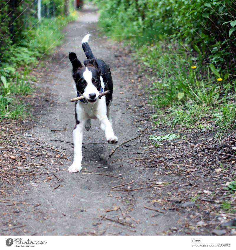Herr Schröder im Glück II Hund schön Freude Tier Wege & Pfade Bewegung Tierjunges Erde Gesundheit Zufriedenheit frei Fröhlichkeit niedlich Schönes Wetter rennen