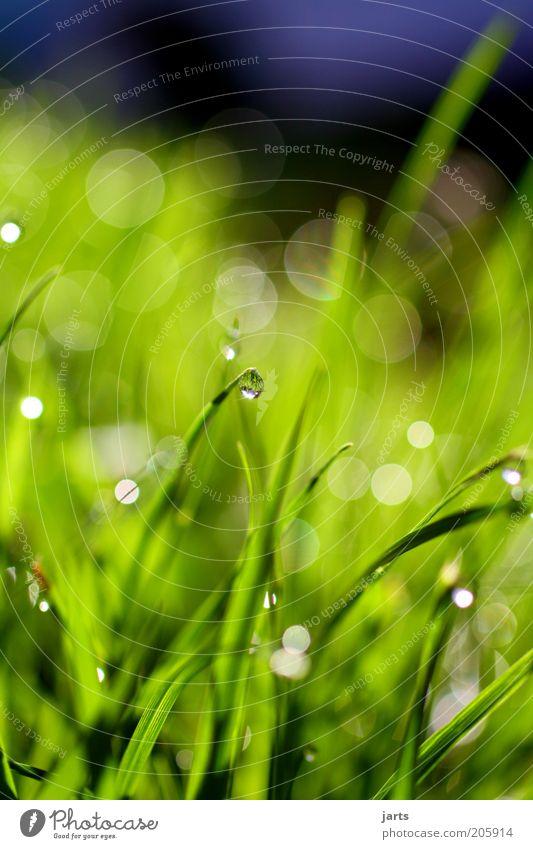 """""""drop"""" Umwelt Natur Wassertropfen Frühling Sommer Gras Grünpflanze Wiese frisch nass grün Farbfoto Nahaufnahme Detailaufnahme Menschenleer Tag Licht Sonnenlicht"""