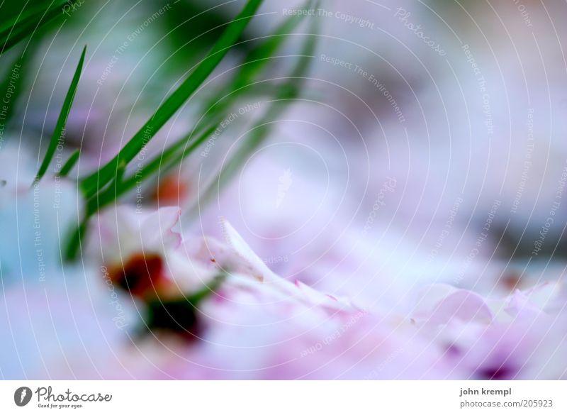 vom winde verweht schön grün Pflanze Gefühle Blüte Gras träumen rosa Zeit Wachstum Wandel & Veränderung Vergänglichkeit Blühend positiv Blütenblatt Frühlingsgefühle