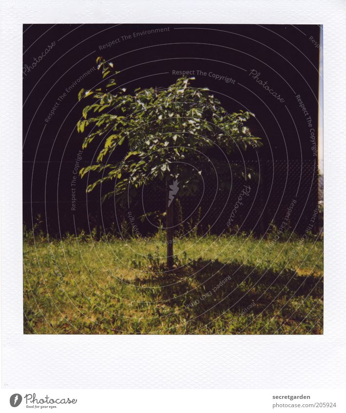 [H 10.1] heal the world. Natur Baum grün Pflanze Sommer schwarz Einsamkeit dunkel Wiese Wand Gras Frühling Garten Mauer klein Umwelt