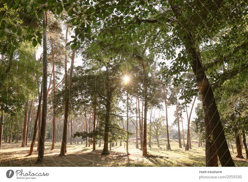 Waldlauf Umwelt Natur Landschaft Pflanze Tier Erde Wolkenloser Himmel Sonne Sonnenaufgang Sonnenuntergang Sonnenlicht Sommer Schönes Wetter Wärme Baum Blatt