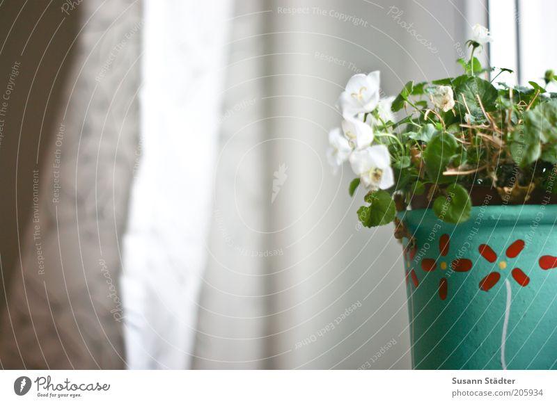 Auf Suses Fensterbrett weiß Blume Pflanze ruhig Blatt Fenster Blüte Wachstum Häusliches Leben türkis Vorhang Gardine alternativ Blumentopf Fensterbrett Zimmerpflanze