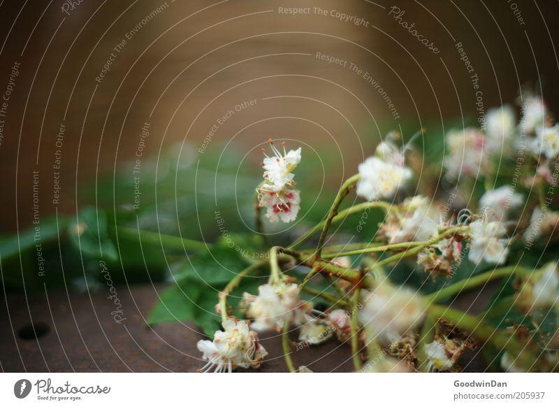 verblüht Natur Blume Pflanze Blüte Umwelt nah Urelemente