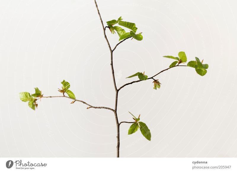 Simple Tree schön Leben ruhig Natur Frühling Pflanze Blatt Beginn ästhetisch einzigartig elegant nachhaltig Zeit Zweige u. Äste Wachstum filigran zart
