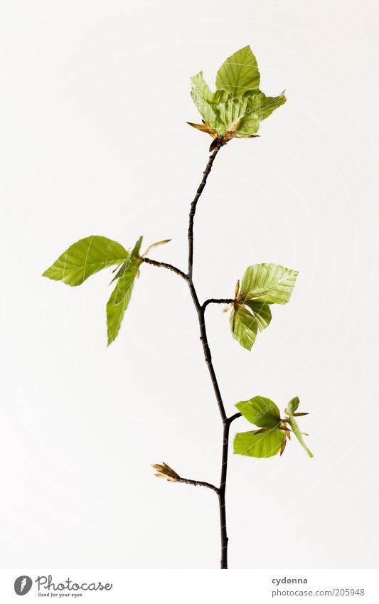 Simple Tree I Natur schön Pflanze ruhig Blatt Leben Frühling elegant Zeit Beginn ästhetisch Wachstum einzigartig zart Zweig zierlich