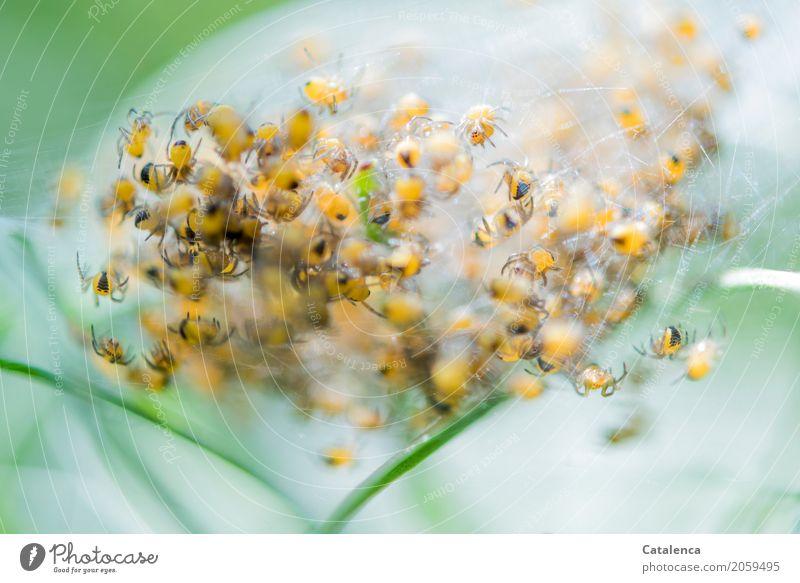 Risiko | als Vogelfutter Natur Pflanze Tier Sommer Gras Halm Wiese Spinnennetz Spinnenbabys Tiergruppe rennen Wachstum klein braun gelb grün weiß Erfolg Umwelt