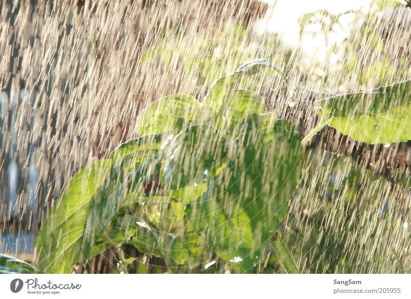 Blümchendusche Wasser Pflanze Sommer Sonne Blume Wärme Garten Wachstum nass Wassertropfen Blühend Sonnenblume Gartenarbeit Durst Durstlöscher gießen