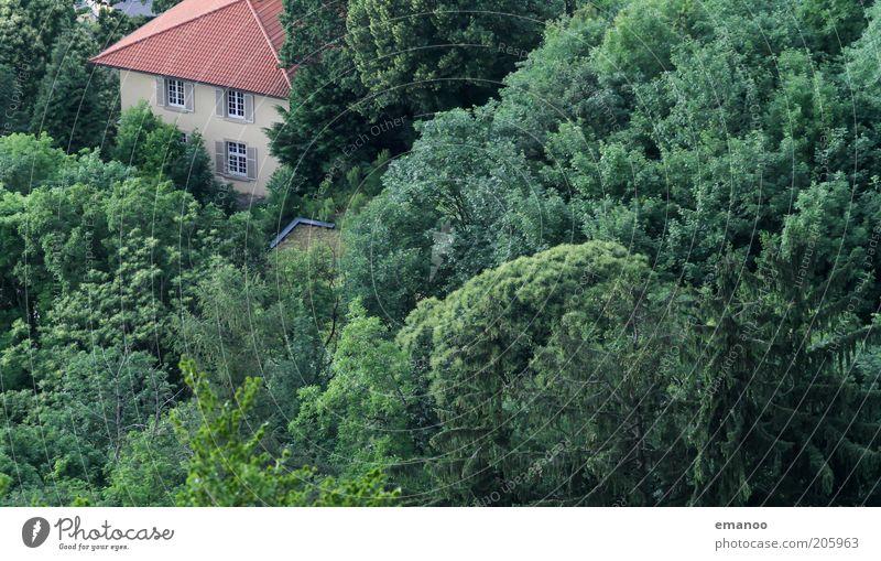 treecastle Natur alt Baum grün Sommer Ferien & Urlaub & Reisen Haus Wald Fenster Stein Gebäude Landschaft Umwelt Ausflug Dach Klima