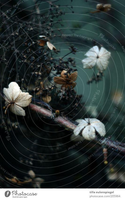 grimm Natur Pflanze Winter Blatt dunkel kalt Traurigkeit Trauer Sträucher Vergänglichkeit wild geheimnisvoll natürlich trocken hängen Zweig