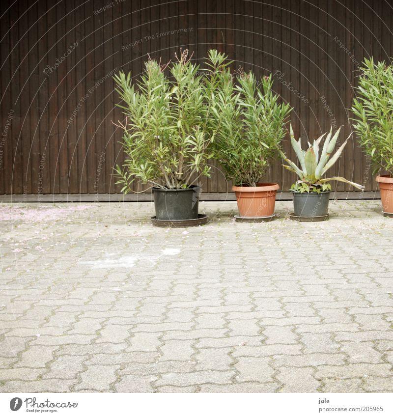 hof grün Pflanze Holz grau Stein braun Platz Sträucher Pflastersteine Topfpflanze Aloe Holzfassade