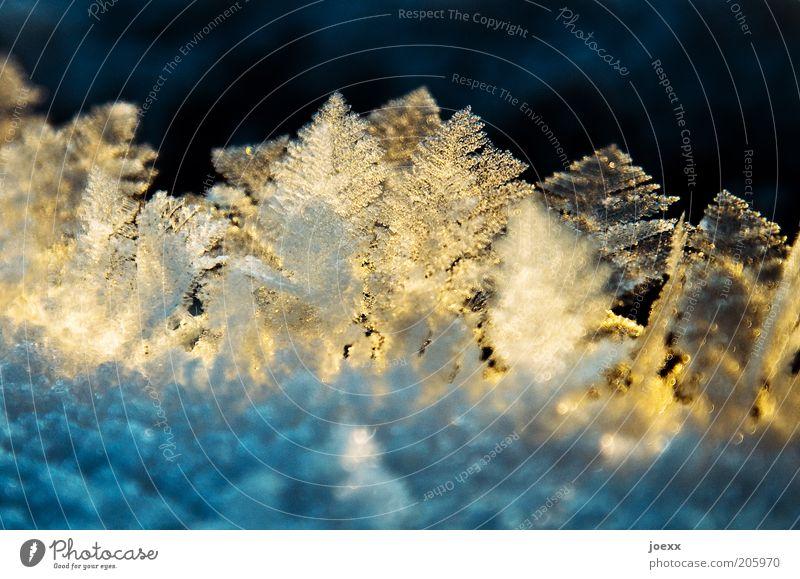 Kleine Erfrischung Winter gelb kalt Eis glänzend Frost Makroaufnahme Eiskristall Natur Lichteffekt