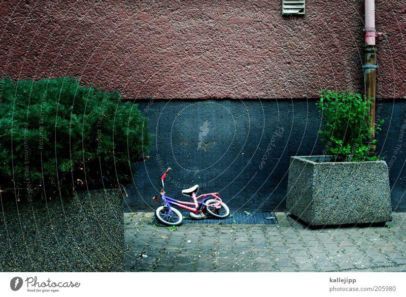 spielpause Pflanze Wand Mauer Fahrrad Zeit leer Sträucher Kindheit verloren vergessen Blumenkasten Kinderfahrrad Kindesentführung