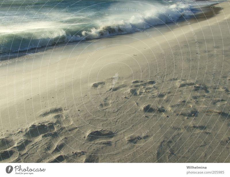 wave me up Umwelt Natur Urelemente Erde Sand Luft Wasser Wind Sturm Wärme Wellen Küste Strand Meer Farbfoto Gedeckte Farben Außenaufnahme Menschenleer Dämmerung