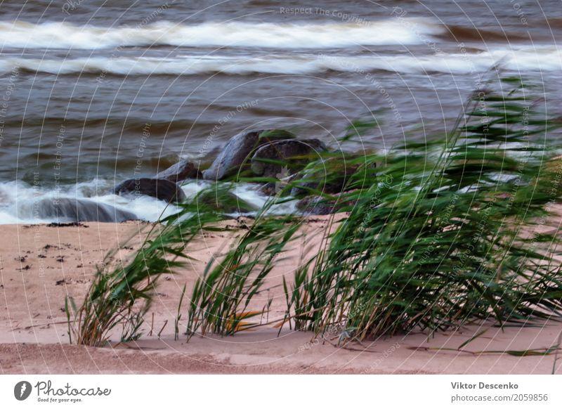 Der Wind am Strand Ferien & Urlaub & Reisen Meer Natur Pflanze Sand Wolken Herbst Wetter Unwetter Wiese Küste Ostsee frisch grün Angst Wasser Düne winken Licht