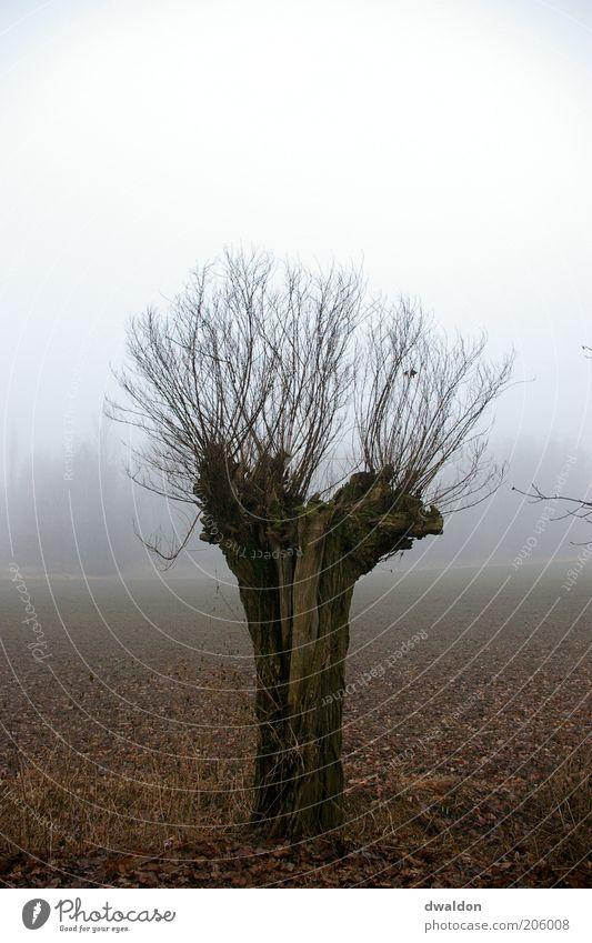 Tree in the Fog Umwelt Natur Landschaft Pflanze Herbst schlechtes Wetter Nebel Baum Feld Gefühle Stimmung Kraft ruhig Einsamkeit Zweig Zweige u. Äste Farbfoto