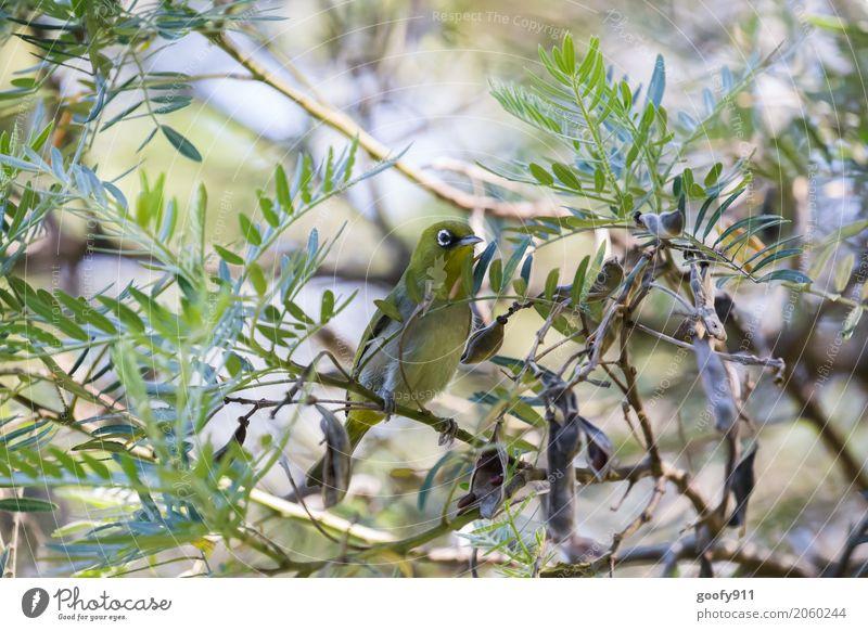 Gut versteckt.... Natur Pflanze grün Sonne Baum Blatt Tier Wald Umwelt gelb natürlich Garten Vogel Park elegant ästhetisch