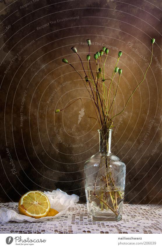 Stillleben Lebensmittel Zitrone Zitrusfrüchte Wohnung Dekoration & Verzierung Vase Kunst Kunstwerk Pflanze Blume Mohnkapsel Mohnblüte Stein Glas Wasser