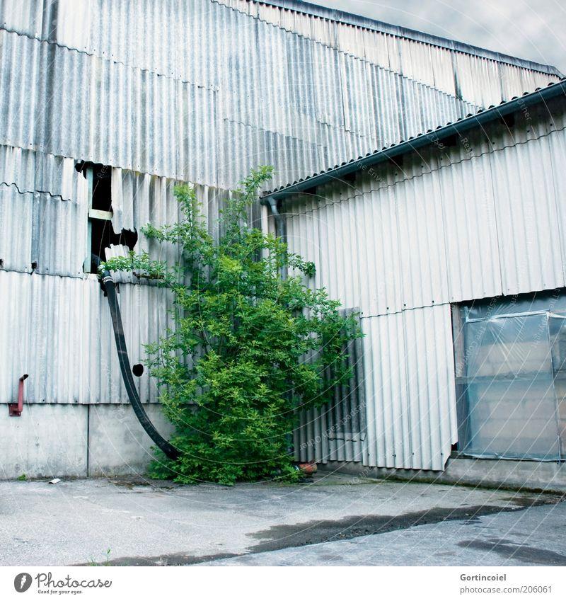 Natur vs. Mensch alt grün Pflanze Gebäude Fassade Industrie Fabrik Sträucher kaputt verfallen Verfall Unternehmen Loch Lagerhalle Schlauch