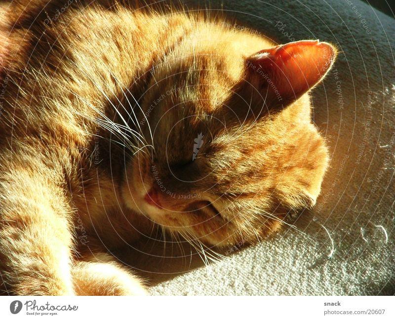 Moritz Sonne Erholung träumen schlafen Katze Hauskatze