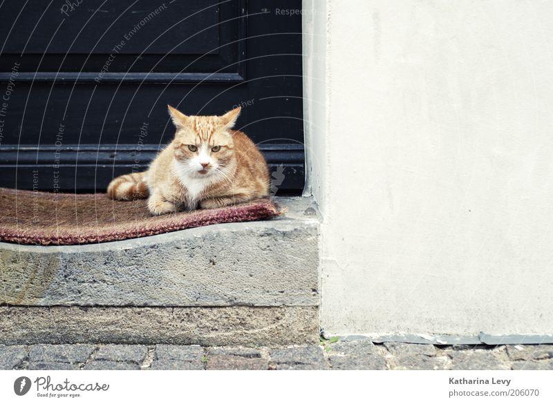 Mattenwärmer ruhig Tier Katze Gebäude warten Tür Tiergesicht liegen Schutz beobachten niedlich Wachsamkeit Geborgenheit Haustier kuschlig geduldig
