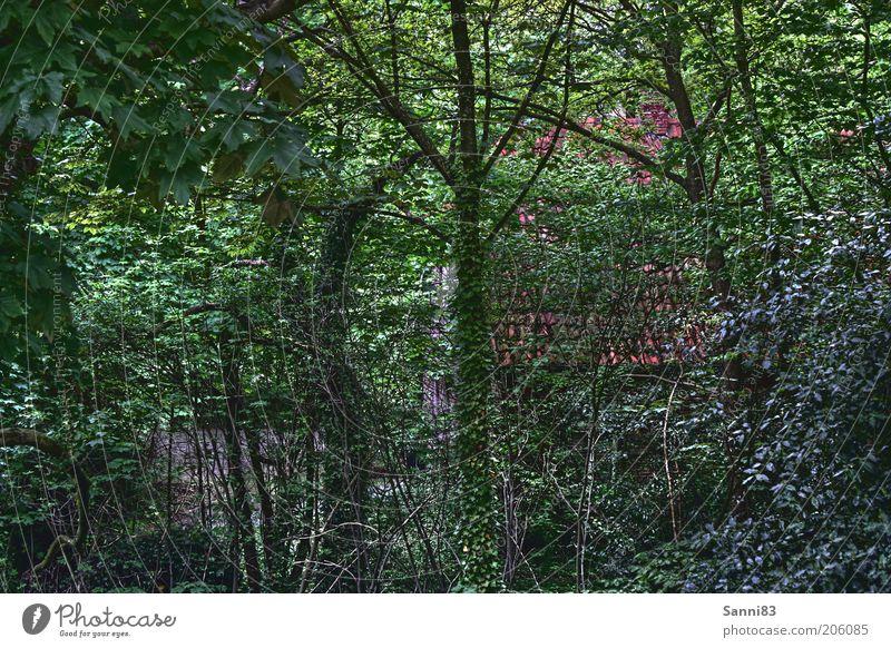 Grüne Hölle Natur Sommer Pflanze Baum Sträucher Efeu Grünpflanze Garten Park Wald Stadtrand Hütte Ruine alt frei natürlich schön wild braun grün Gefühle