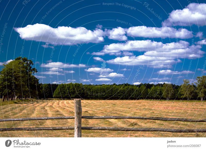 es ist sommer. Sommerurlaub Himmel Wolken Schönes Wetter Gras Wiese Duft heiß trocken blau gelb Natur Heu Heuernte Weide Zaun Zaunpfahl Außenaufnahme Holzzaun