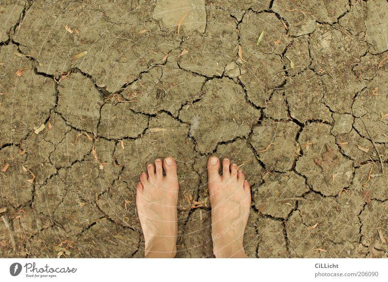 Sommererde Haut Fuß 1 Mensch Umwelt Natur Urelemente Erde Klima Klimawandel Wärme Dürre Fußspur berühren entdecken gehen dehydrieren Nackte Haut Barfuß Riss