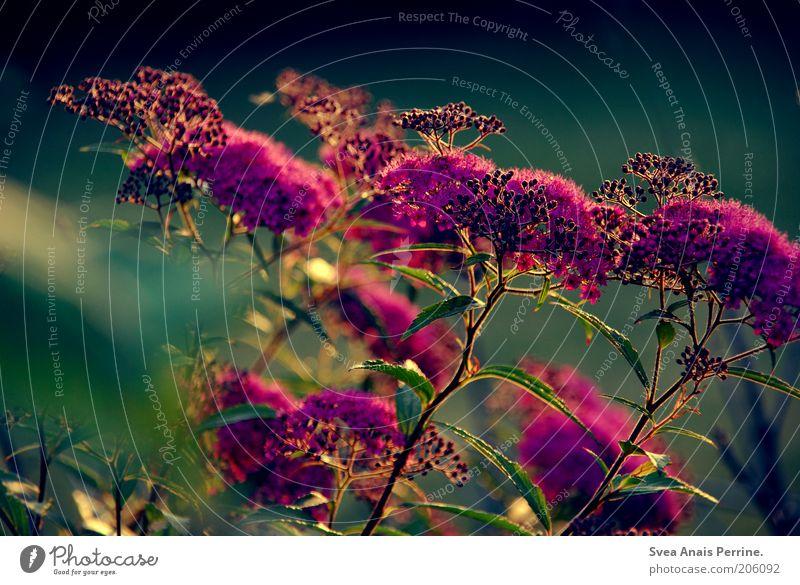 lila,grün. schön Blume Pflanze Sommer Blüte Frühling Umwelt violett Blühend leuchten Symbole & Metaphern exotisch Frühlingsgefühle