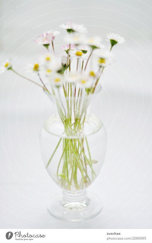 gänseblümchen Blume Gänseblümchen Blumenstrauß Vase Stengel Blüte Frühling Glas Wasser hell