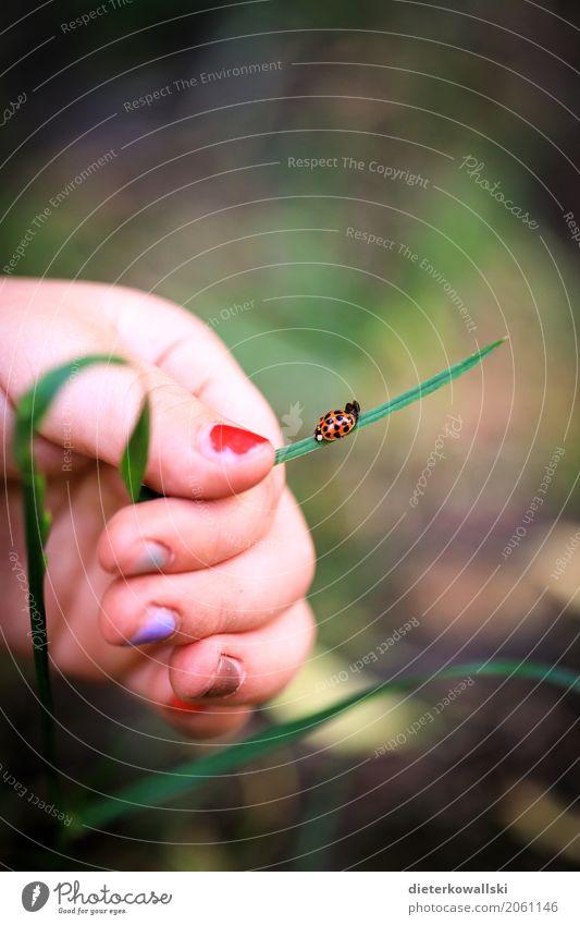 Freunde Kind Natur Pflanze Landschaft Tier Freude Umwelt Frühling Gras Spielen Garten Kindheit lernen entdecken Bildung Insekt
