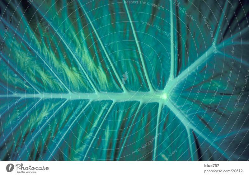 Blattstruktur grün leaf Strukturen & Formen structure kew gardens