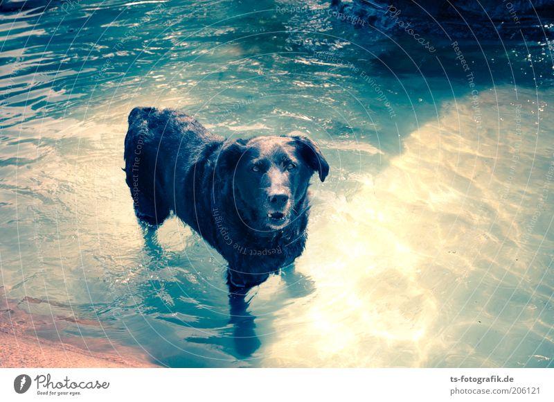 Hundstage Natur Wasser blau Sommer Freude Tier kalt Erholung Hund Wärme Wetter nass Schwimmbad Schwimmen & Baden Lebensfreude