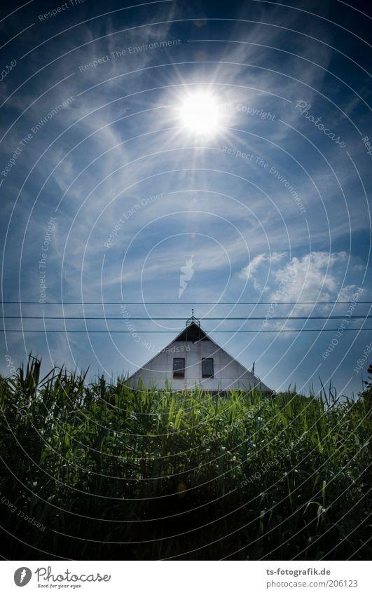 Der Maisgürtel Natur Himmel blau Pflanze Haus schwarz Wolken dunkel Wärme Landschaft Linie Feld Umwelt Fassade Wachstum USA