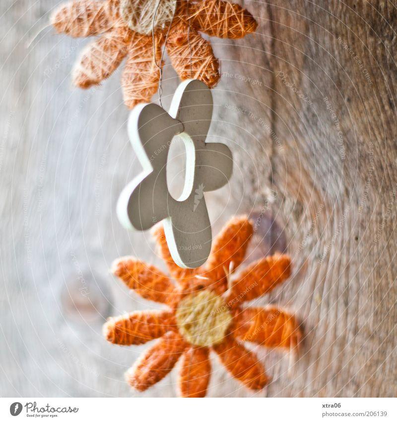 guten morgen-blümchen Natur schön Blume Blüte Frühling Holz orange Dekoration & Verzierung natürlich Holzbrett verschönern Maserung Holzwand Girlande