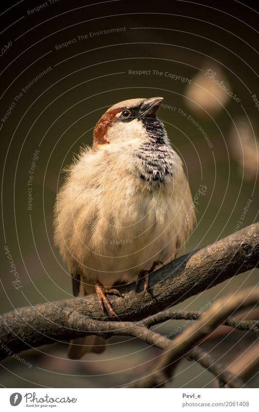 Flugbereit Zoo Natur Tier Wildtier Vogel Flügel Spatz 1 warten ästhetisch dick ruhig elegant Farbfoto Außenaufnahme Menschenleer Tag Zentralperspektive