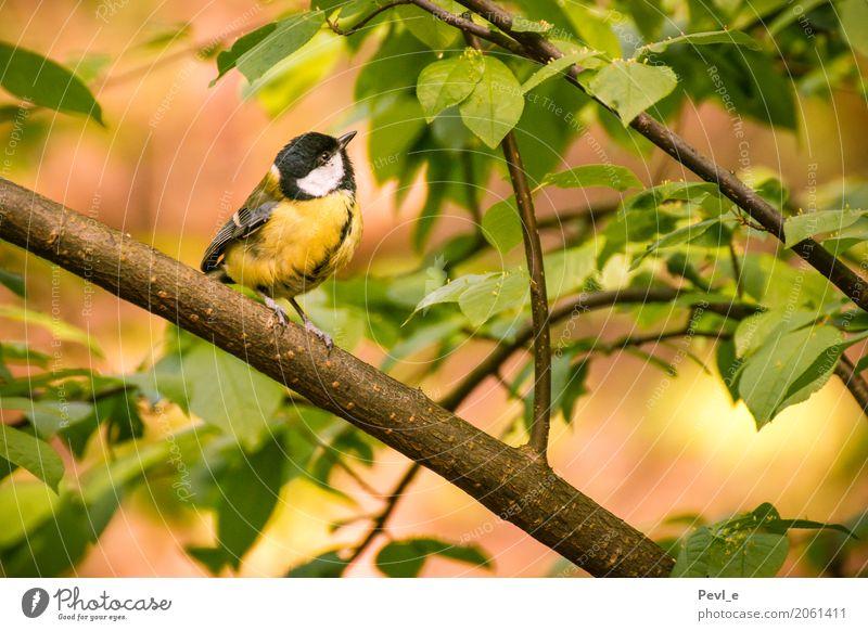 Lied des Friedens Umwelt Natur Pflanze Tier Frühling Schönes Wetter Baum Blatt Wald Vogel Flügel 1 Erholung träumen Glück natürlich positiv Gefühle Stimmung