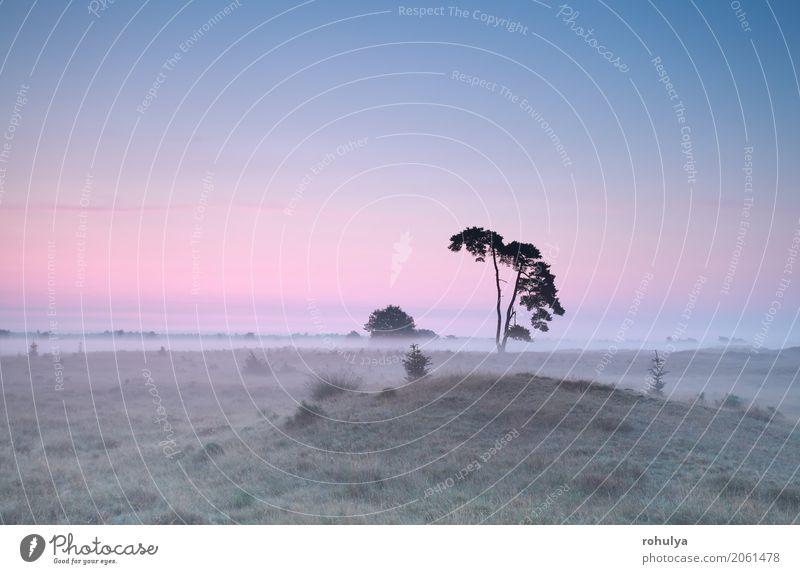 ruhiger nebligen Sonnenaufgang über Wiese mit Kiefer Himmel Natur Sommer Baum Landschaft rosa Nebel Aussicht Schönes Wetter Hügel Gelassenheit Grasland