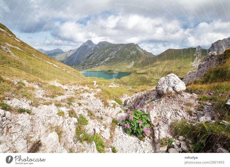 Wildblumen auf Felsen am Alpensee, Deutschland Ferien & Urlaub & Reisen Berge u. Gebirge Natur Landschaft Himmel Wolken Sonnenlicht Schönes Wetter Blume Wiese