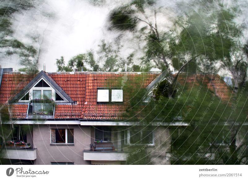 Sturm Himmel Baum Blatt Haus Bewegung Textfreiraum Häusliches Leben Wetter Wind gefährlich Klima Ast bedrohlich Dach Risiko Zweig