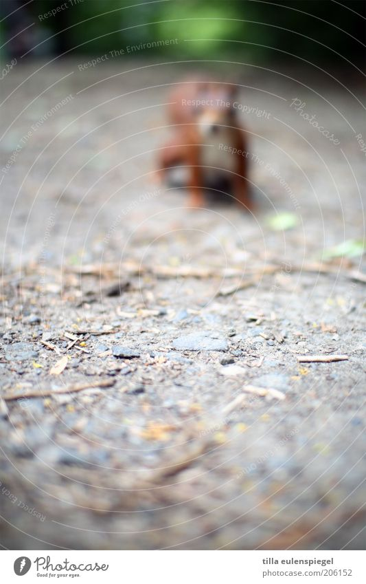 neulich ging ich ohne Brille aus dem Haus Ausflug Umwelt Natur Park Tier Wildtier Eichhörnchen 1 beobachten warten Neugier wild Interesse entdecken Sehvermögen